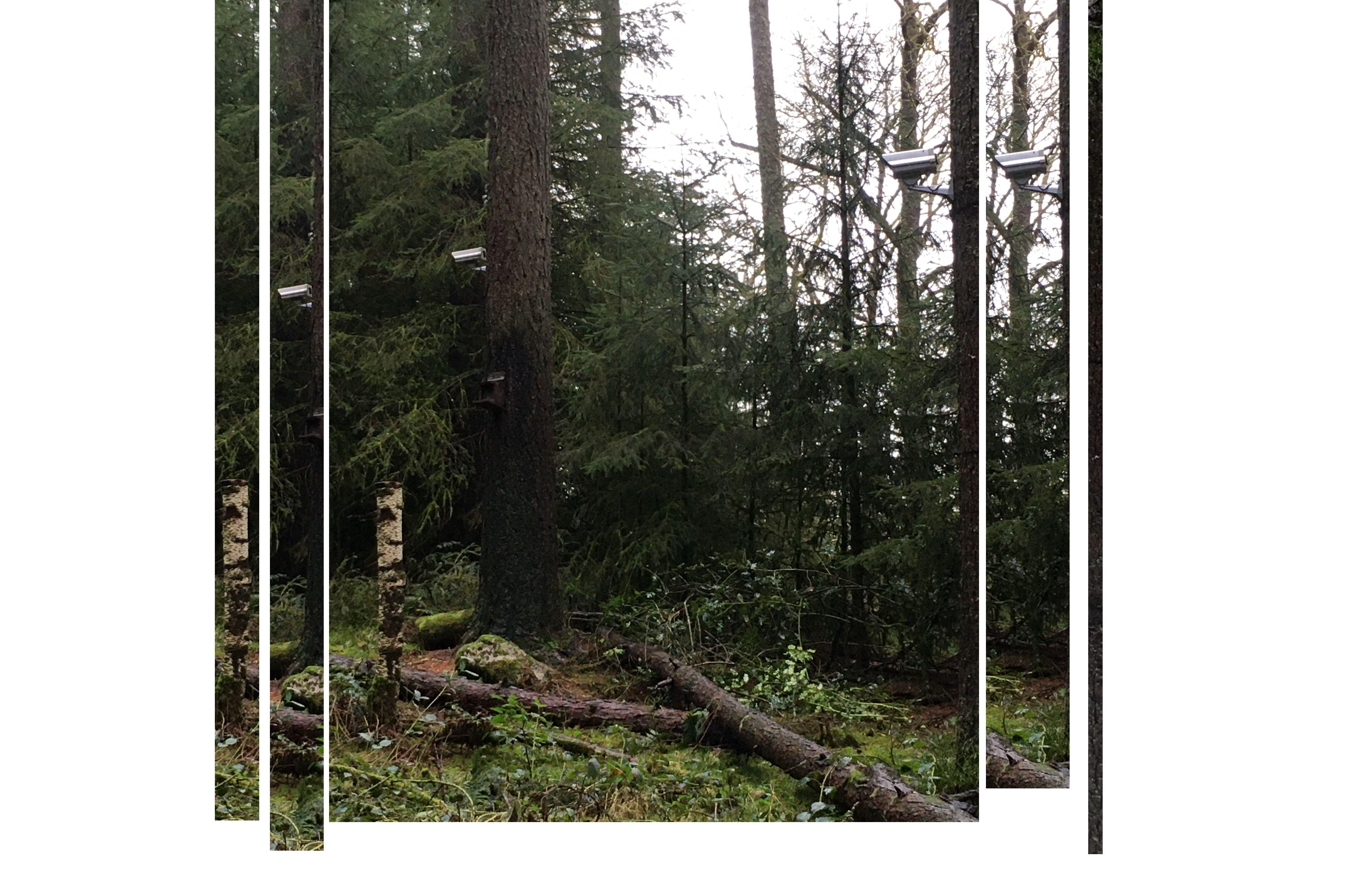 surveillance_cameras_on_trees_in_queenelizabeths_forest